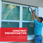 Home Pest Prevention Tips